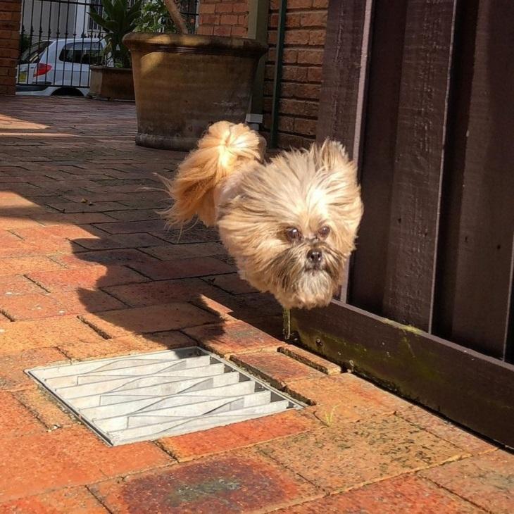 תמונות ברגע הנכון: כלבה שנדמה כאילו היא מעופפת באוויר