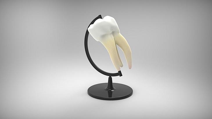 הצמחת שיניים: איור של שן אנושית התלויה על מתקן גלובוס