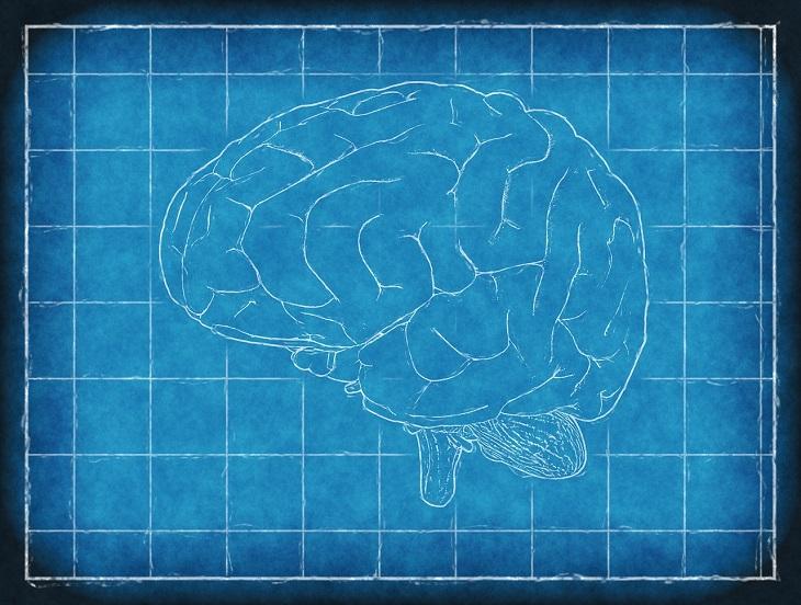 יתרונות אבקת קקאו טבעית: איור של מוח אנושי על גבי משבצות