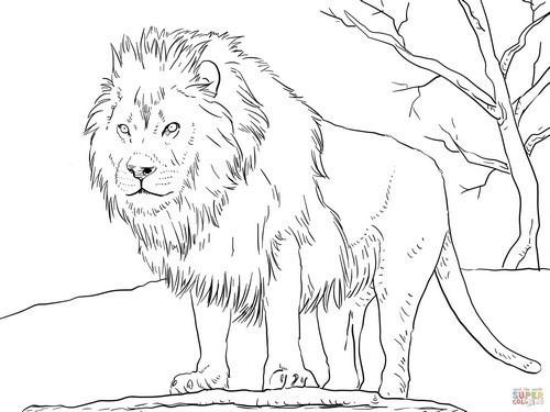 דפי צביעה של חיות לילדים: אריה