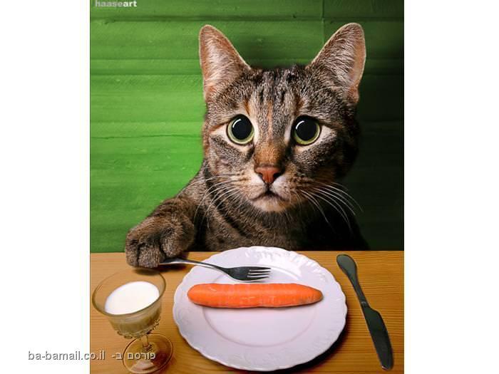 חתולה אוכלת