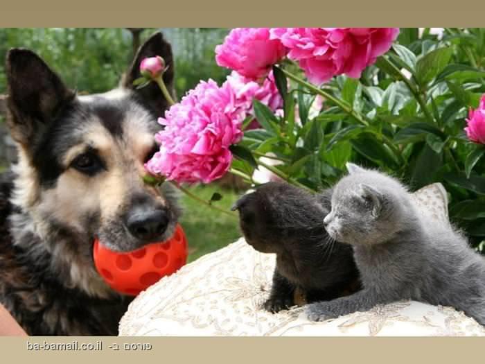בעלי חיים, חיות, מצחיק, חמוד, תמונה