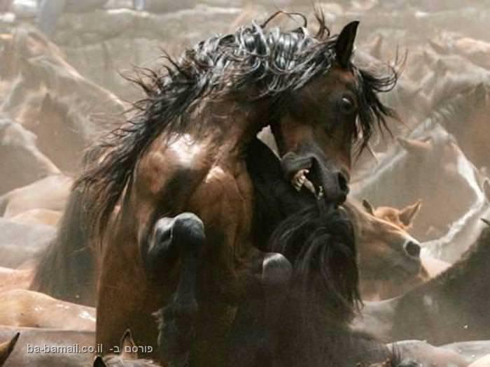 תמונות נדירות מהעולם, סוסים, פרא