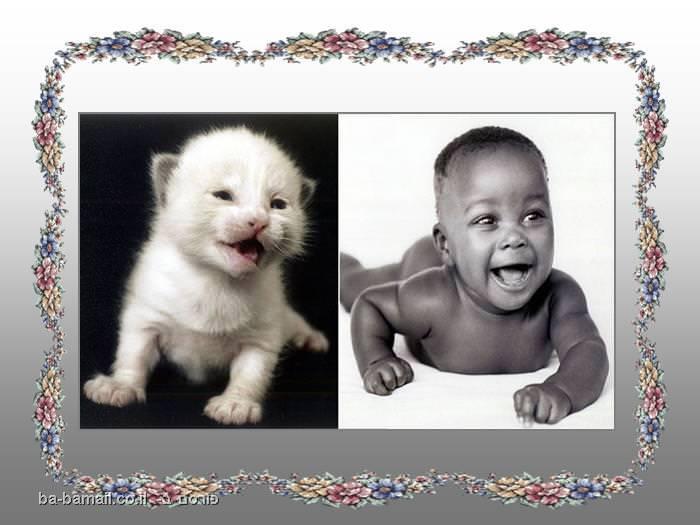 דמיון, בעל חיים, תינוק, חתול, לבנבן