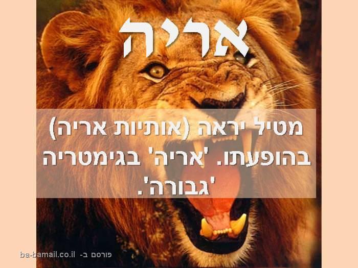 חיות, שמות, משמעות, אריה, אריות