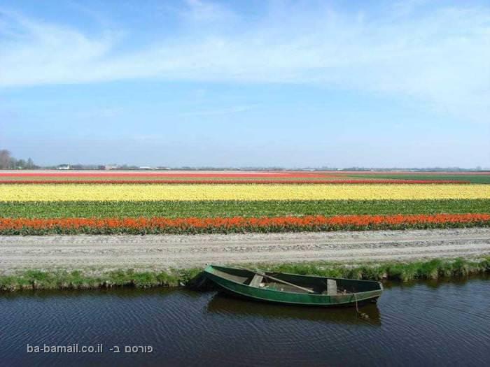 גני הפרחים בהולנד - חגיגה של ניחוחות וצבעים