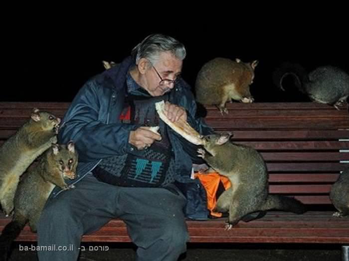 חיות ובני אדם