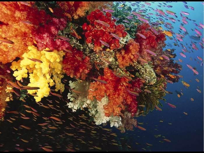 אלמוגים