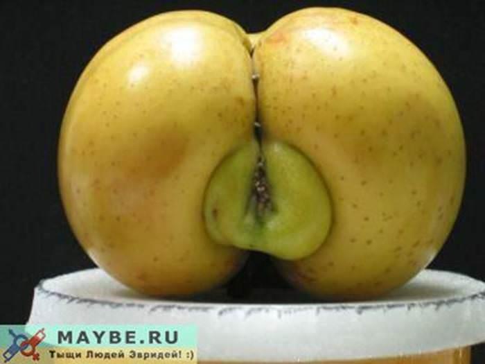 טבע סקסי (בעריכה)