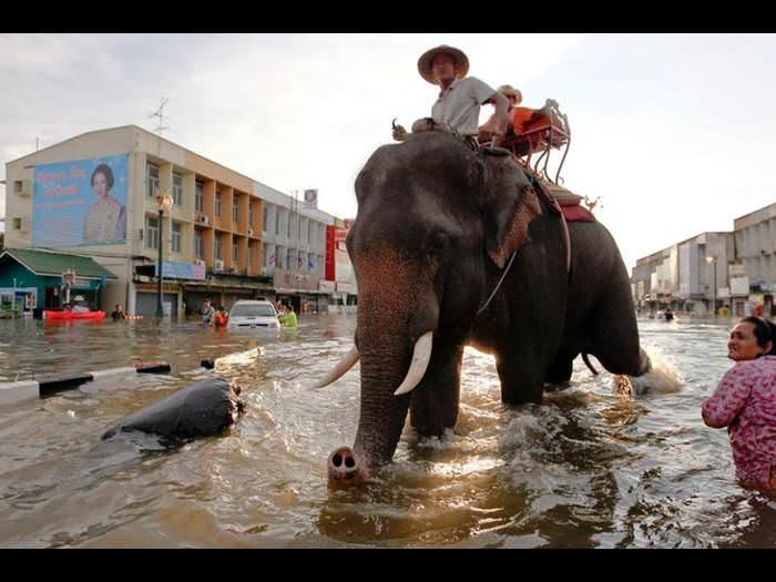 תמונות מהשטפונות בתיאלנד 2011