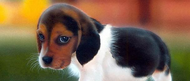 אפקט הכלב החמוד