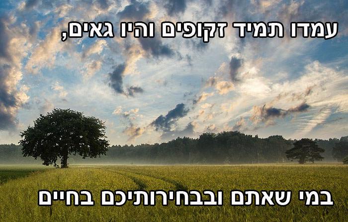 עצות לחיים מאושרים שאפשר ללמוד מהעצים: עמדו זקופים והיו גאים במי שאתם ובבחירותיכם בחיים