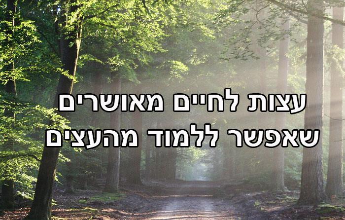 עצות לחיים מאושרים שאפשר ללמוד מהעצים