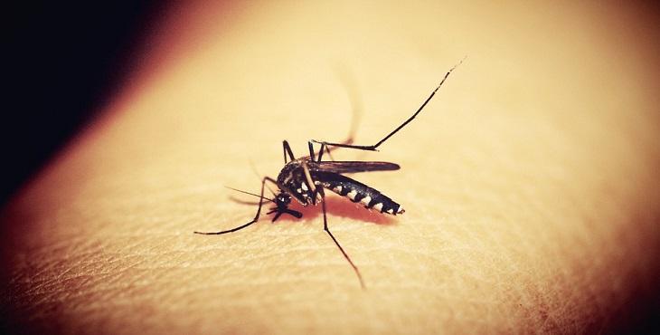 קטלני יתושים: יתוש