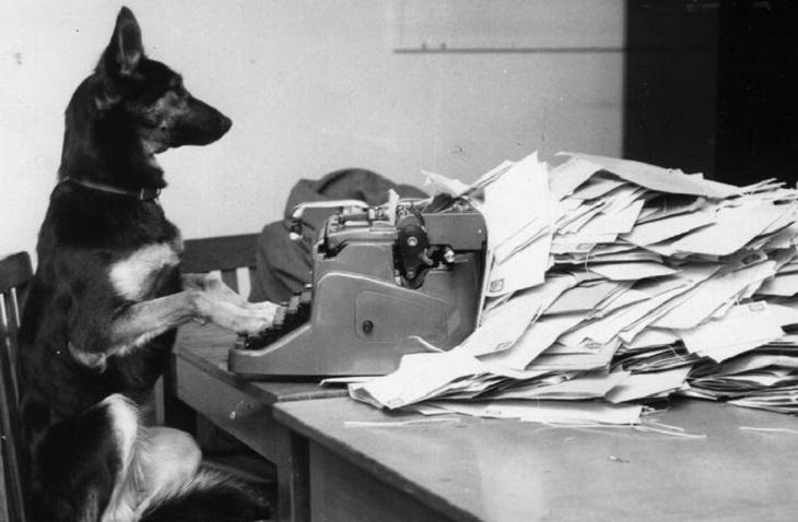 תמונות שצולמו ברגע הנכון: כלב שיושב ליד מכונת כתיבה ונראה כאילו הוא עובד