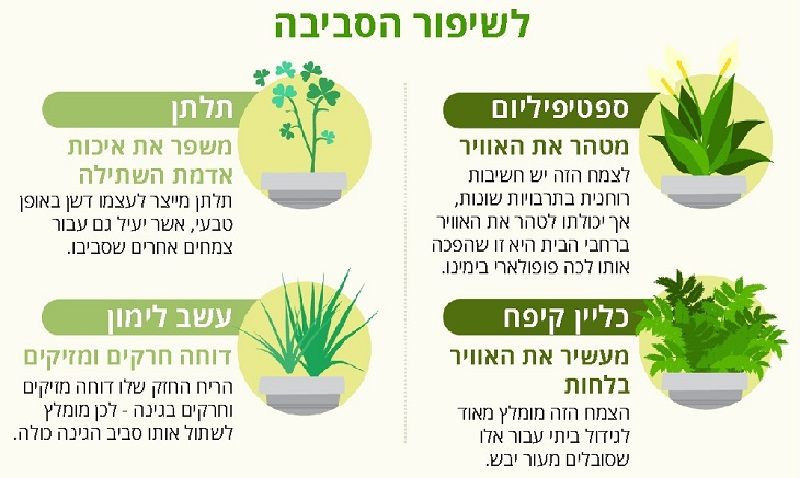צמחים מומלצים לגידול בבית או בגינה