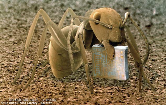 מיקרוקוסמוס - תמונות תקריב מדהימות!!