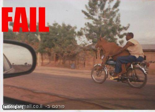 איש ופרה על אופניים