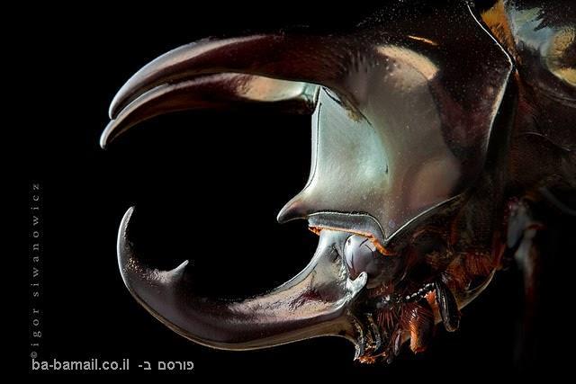 מדהים! תמונות תקריב של חרקים