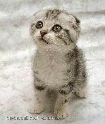 חתול חמוד