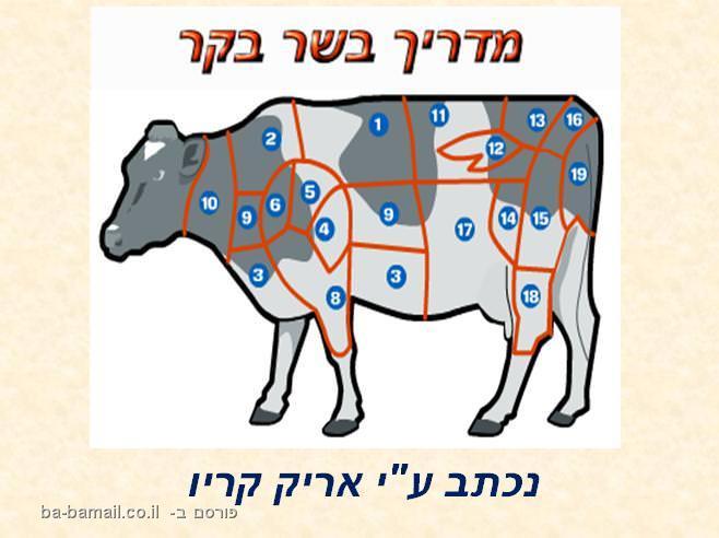הכל על בשר