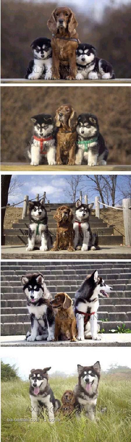 חברים וכלבים