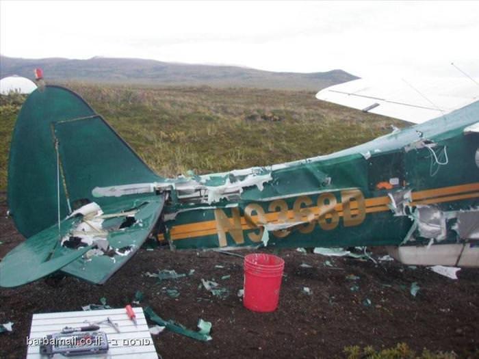 מקרה מדהים של דוב רעב, טייס יצירתי וסלוטייפ