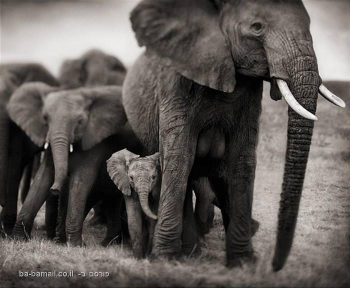כמה עובדות על החיות הגדולות ביותר על היבשה