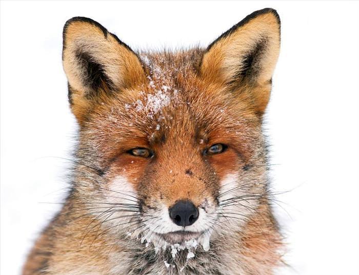 beautiful animal photos