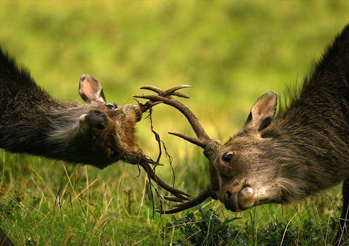 תמונות מדהימות של חיות