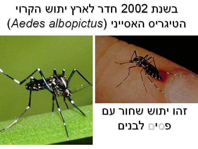 יתושים, הדברה, טבע, בריאות, תמונות