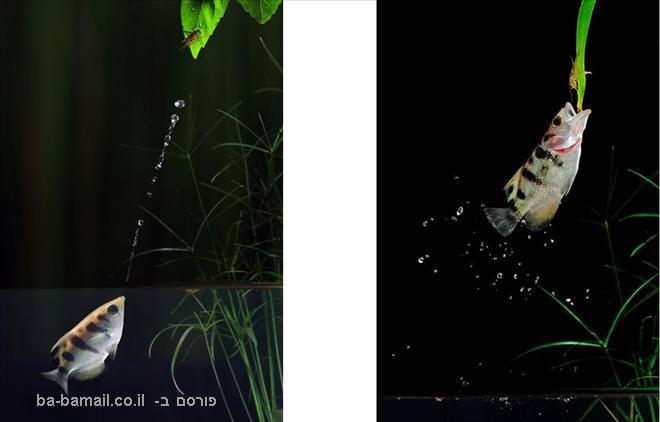 בעלי חיים, קיפאון, צילום