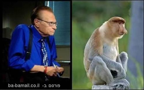קוף חוטם, לארי קינג, דומה