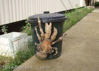 בעלי חיים יוצאי דופן, חיות מוזרות, סרטן קוקוס, סרטן קוקוס ענק