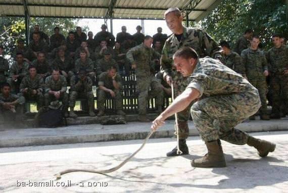 חיל הנחתים, מארינס, תאילנד, חייל אמריקאי, נחש