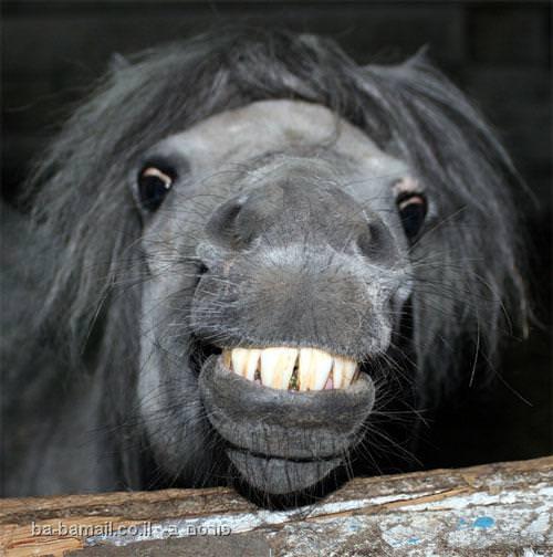 בעלי חיים, טבע, חיוך, מצחיק, תמונה