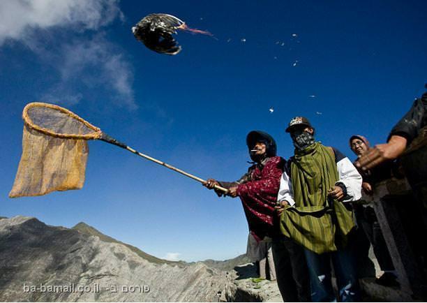 פסטיבל הינדי, ג'אווה, אינדונזיה, טנג'רים, הר ברומו, הר געש, באפלו