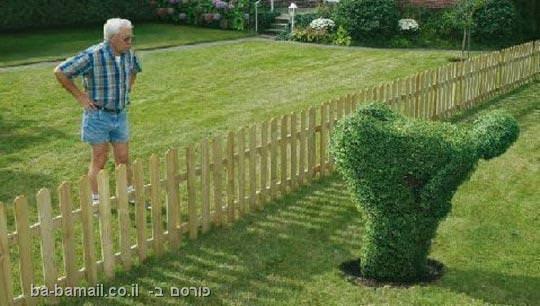 שכנים, סיכסוך, מצחיק