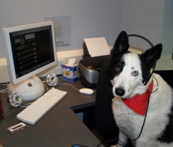חיות מחמד ומחשבים