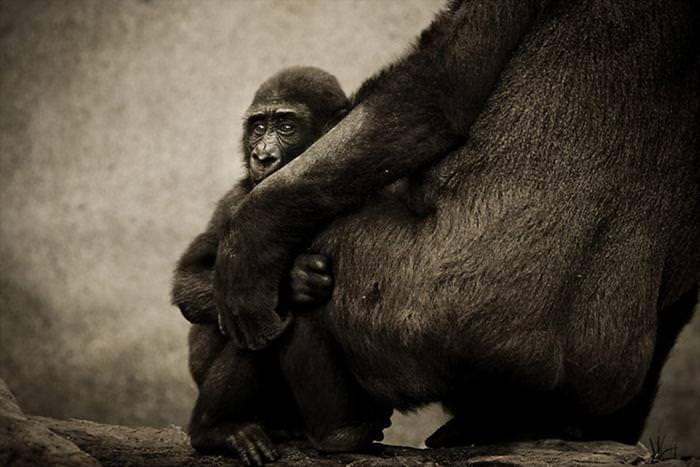 הטבע מעולם לא נראה אנושי כ``כ - תמונות מדהימות!