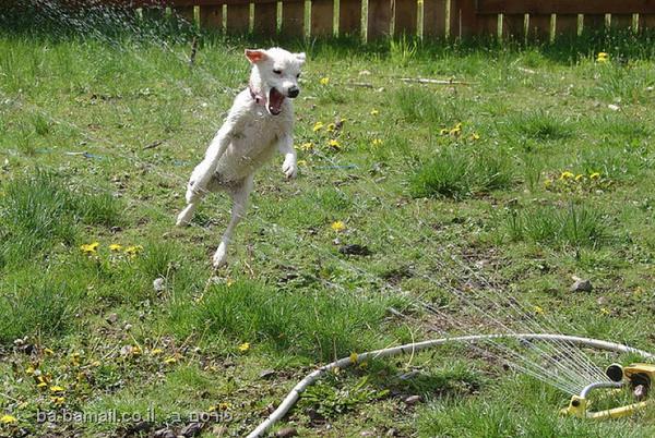 כלבים נגד ממטרות - הקרב האפי! (בעריכה)