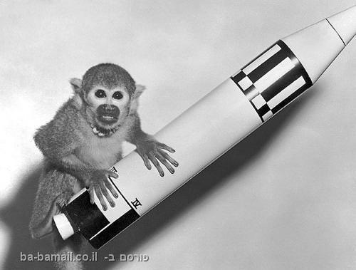 בעלי חיים בחלל