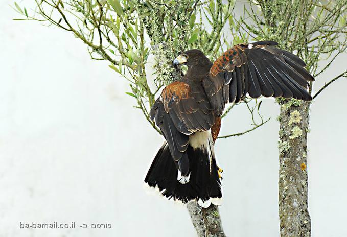 בעלי הכנף של מנואלה ויאולה - לאוהבי טבע!