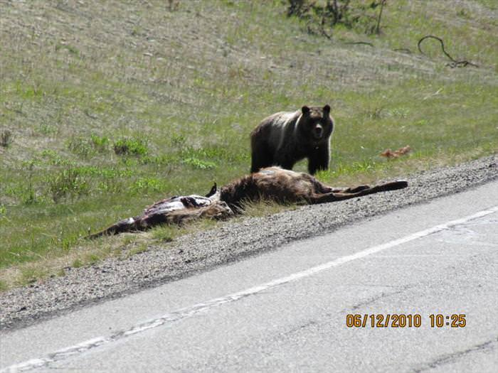 גבר, יש לך הרבה מה ללמוד מהדוב הזה!