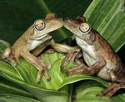 חיות מתנשקות - תמונות מלאות באהבה! (בעריכה)