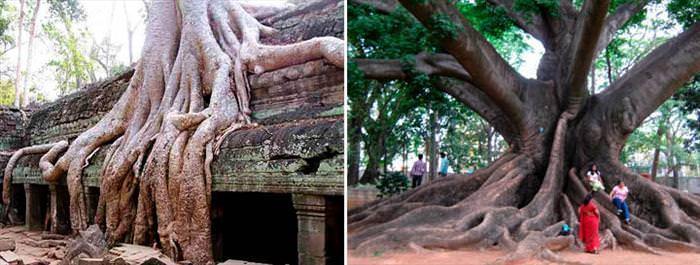 תמונות עצים (בעריכה)