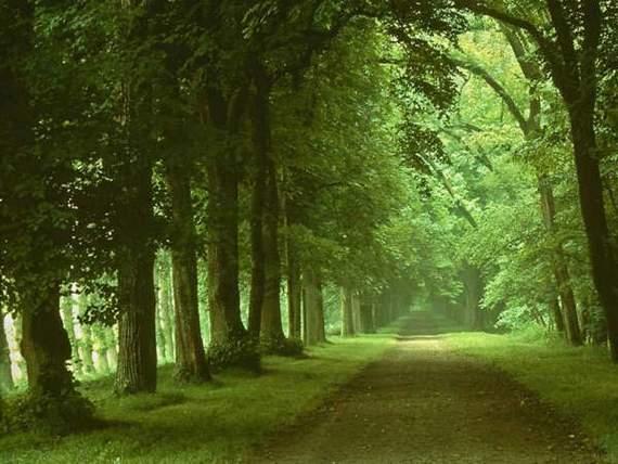 כך בוודאי היו נראים השבילים לגן עדן - תמונות מדהימות! (בעריכה)