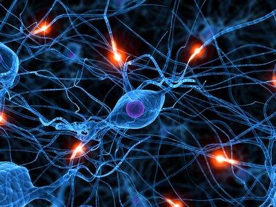 תאי מוח
