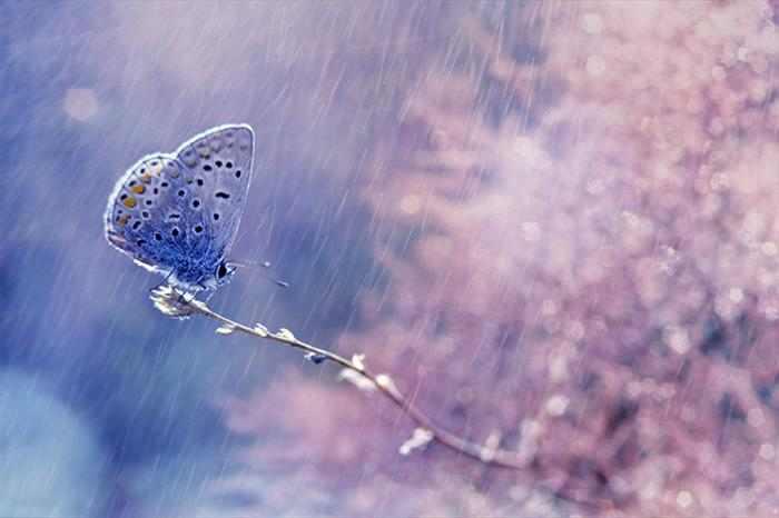 עולם החי בצבעי פסטל - תמונות יפהפיות!