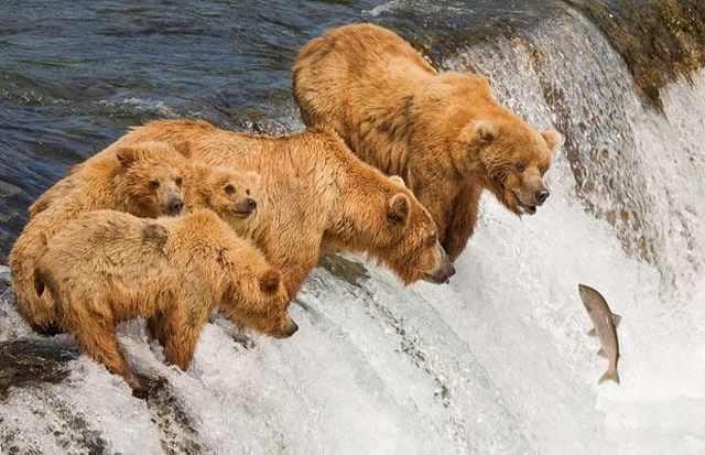 תמונות של חיות ברגע הנכון